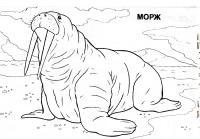 Иллюстрация 3 из 5 для мир животных: арктика (раскраска) | лабиринт - книги. источник: рива