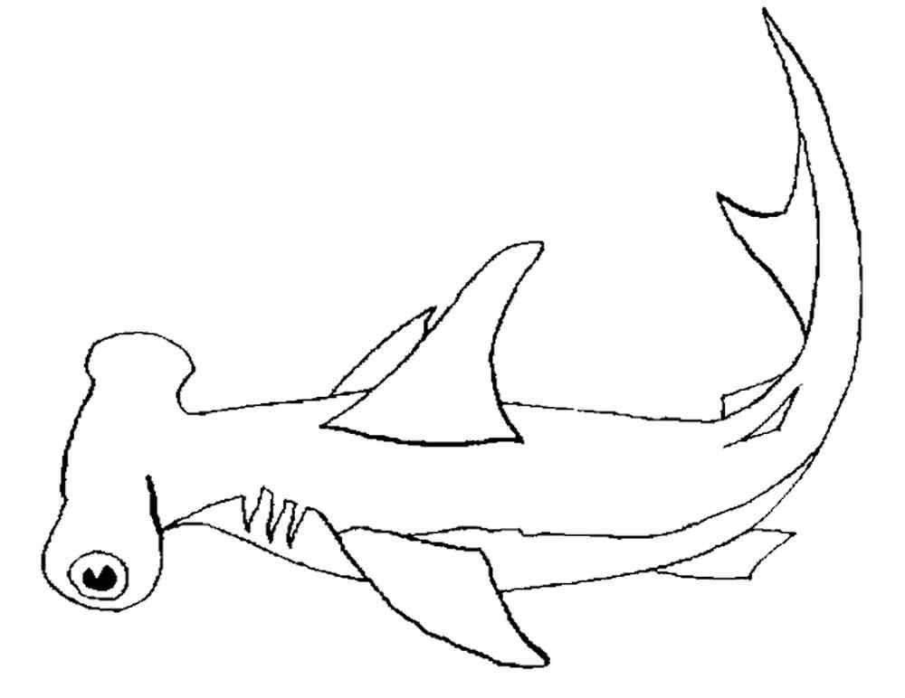 Акула-молот, скачать или распечатать раскраску распечатать скачать