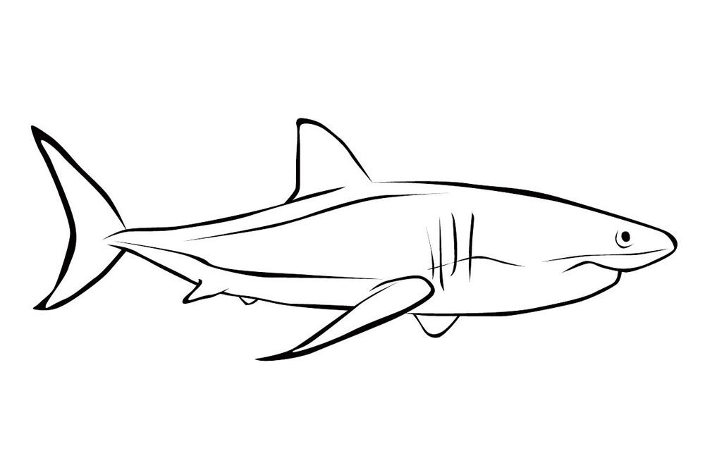 Раскраски рыбы акула