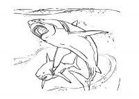 Акулы, скачать или распечатать раскраску распечатать скачать