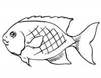 Детские раскраски для девочек и мальчиков. недовольная рыбка