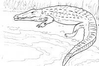 Распечатать бесплатные раскраски для детей: животные, крокодил