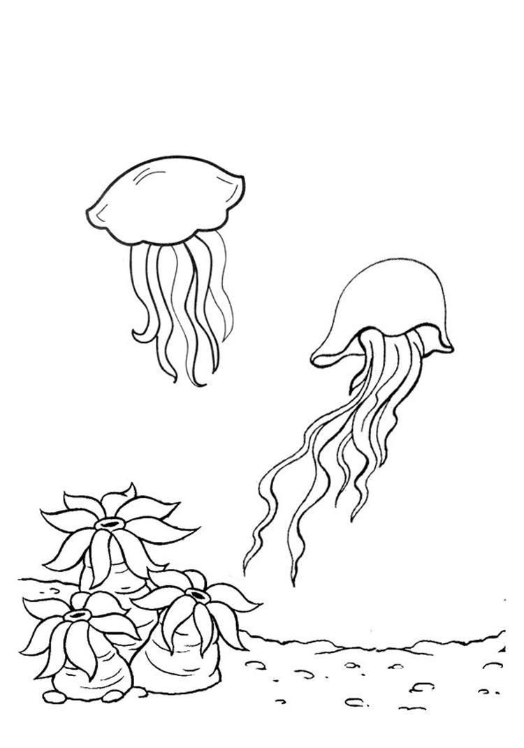 Раскраски подводный мир детская раскраска подводный мир,  медузы, водоросли