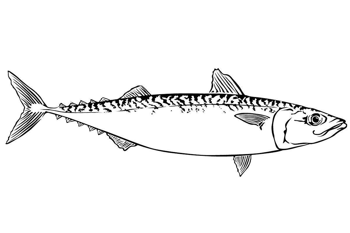 Раскраски подводный мир детская раскраска подводный мир,  скумбрия