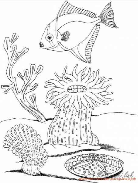 Раскраски подводный мир природа подводный мир кораллы рыбка