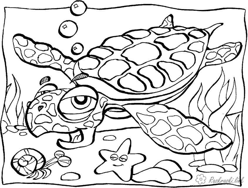 Раскраски подводный мир подводный мир, черепаха, морская звезда