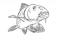 Раскраски подводный мир, рыба с усами