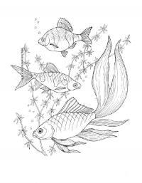 Детские раскраски для девочек и мальчиков. рыбки среди водорослей