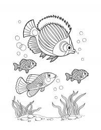 Детские раскраски для девочек и мальчиков. рыбка с колечими плавниками