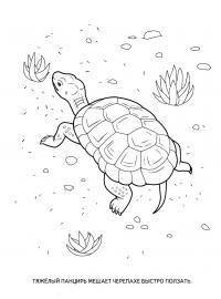 Раскраски детская детская раскраска рептилии, черепаха