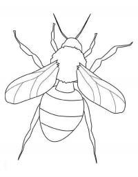 Детские раскраски для девочек и мальчиков. пчела
