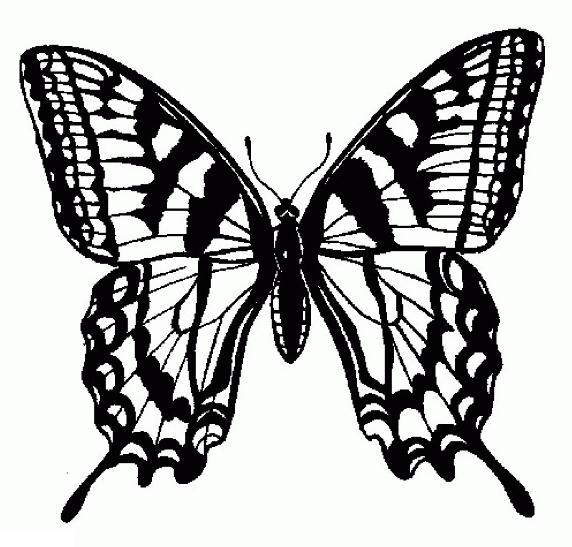 Раскраска бабочки махаона