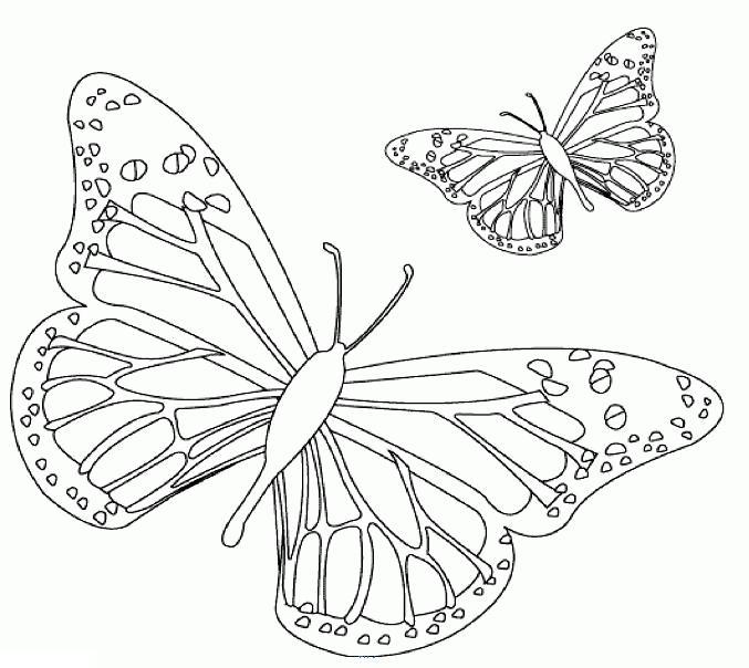 Бабочки - сайт раскрасок