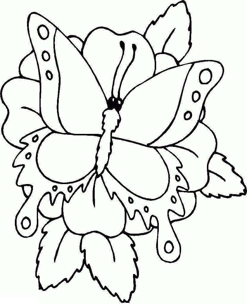 Раскраска цветы и бабочка на цветке