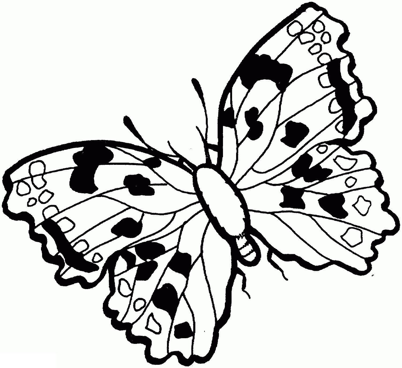 Раскрасить бабочку с пятнистыми крыльями