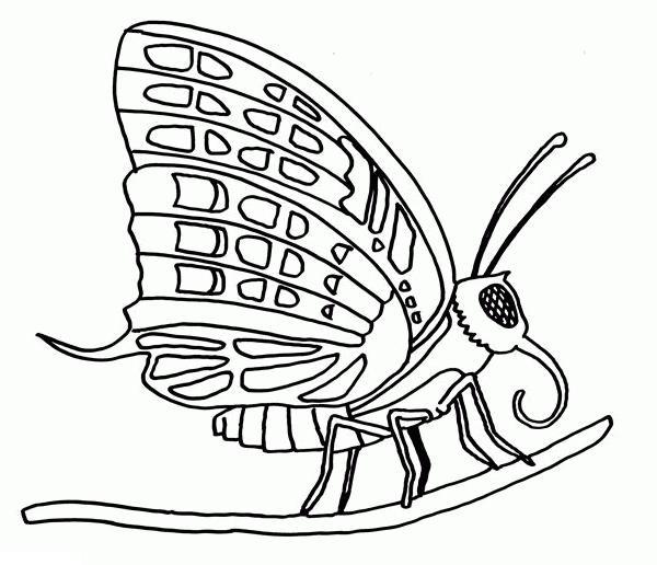 Раскраска бабочка на веточке