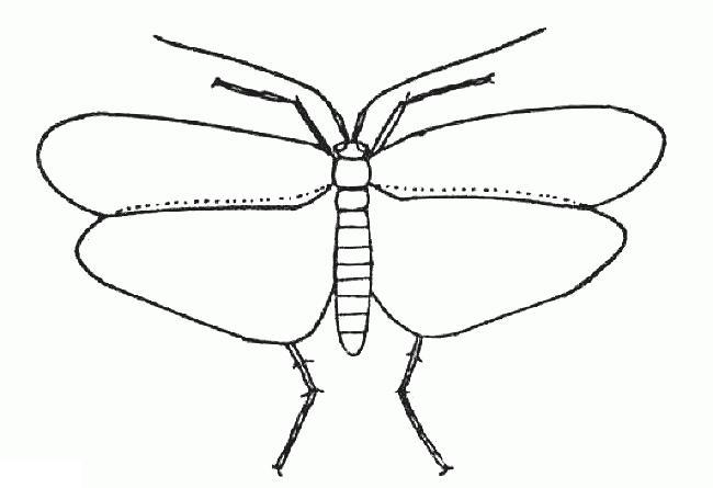 Раскраска бабочка мотылек