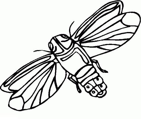 Бабочка ночной мотылек раскраски детские скачать