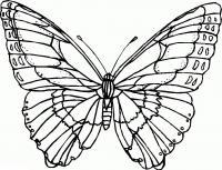 Раскраски бабочек. сайт для детей