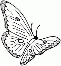 Раскраски бабочка в полете распечатать
