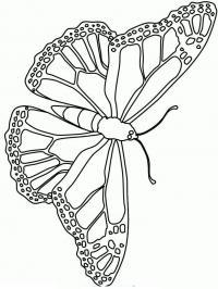 Раскраска бабочка с крачивым рисунком по краям крыльев распечатать