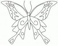 Раскраски насекомые бабочка