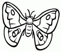 Скачать раскраски бабочек бесплатно