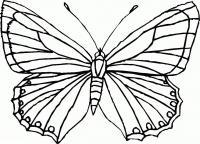 Скачать раскраски для детей. бабочка