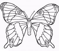 Раскраски бабочки скачать бесплатно