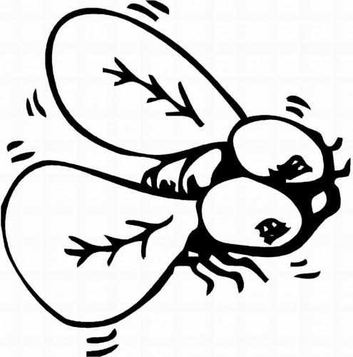 С насекомыми Раскраска муха Раскраски распечатать