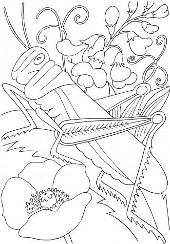 Раскраска кузнечик в цветох