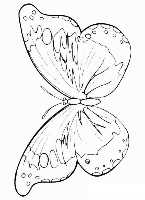 Раскраски насекомые раскраски для детей