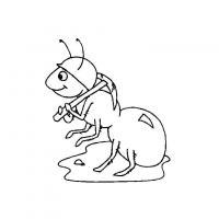 Раскраска насекомые муравей строитель