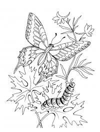 бабочка гусеница в цветах