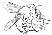 Раскраски насекомые детские раскраски, насекомые, пчела, пчела на цветке