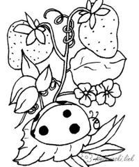 Раскраски насекомые детские раскраски, насекомые, божья коровка, клубника, клубнички, растения, ягоды