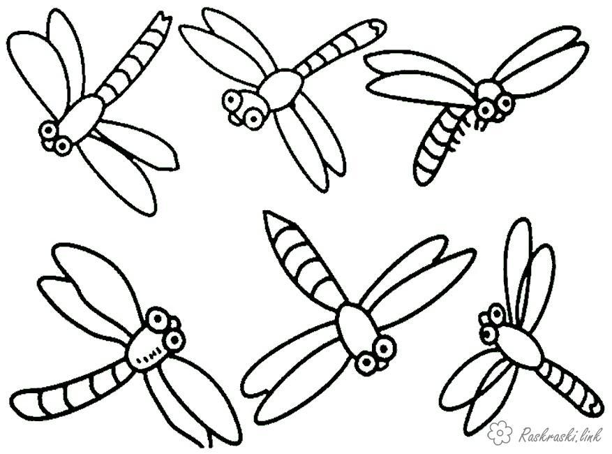 раскраски насекомые раскраска стрекоза насекомые стрекоза