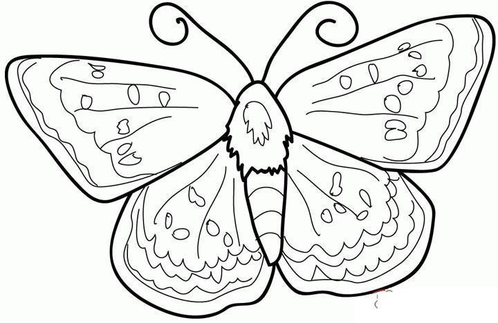 Раскраски насекомые насекомые, бабочка с мохнатым брюхом