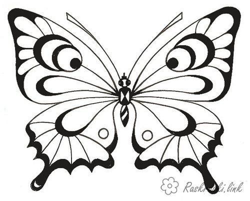 Раскраски насекомые бабочка, насекомые