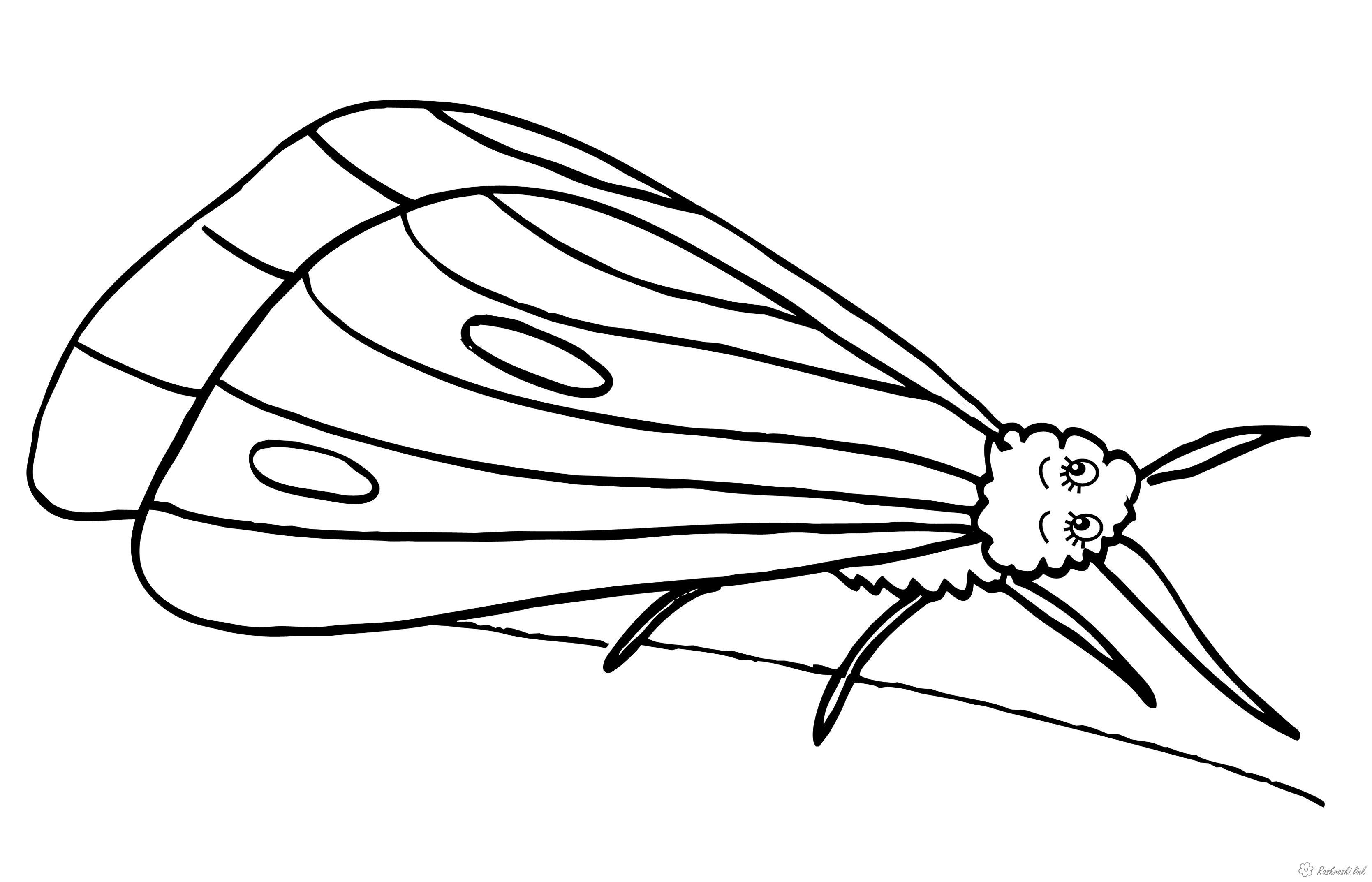 Раскраски насекомые раскраска насекомые, мотылек, бабочка