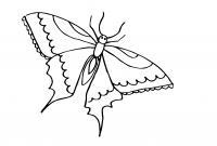 Раскраски насекомые детские раскраски, насекомые, бабочка