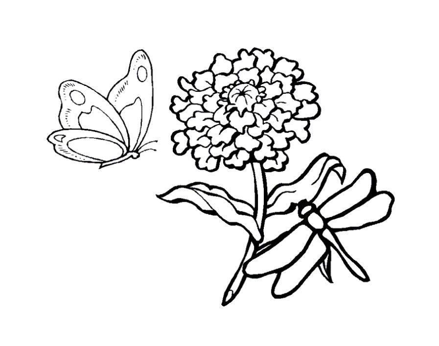 Раскраска насекомые бабочки на цветке