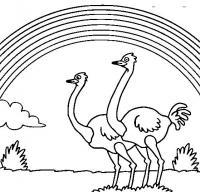 Раскраски явления природы природа природное явление радуга страусы