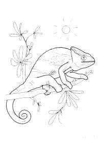 Раскраски солнце рептилии, хамелеон, ветка, солнце