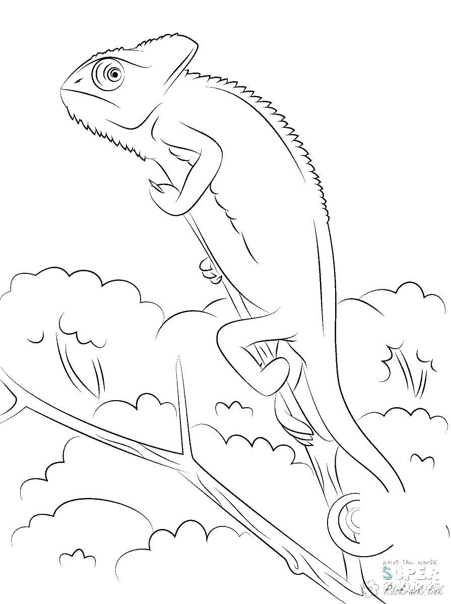 Раскраски детская детская раскраска рептилии, хамелион