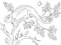 Раскраски детская детская раскраска,  рептилии,  хамелион