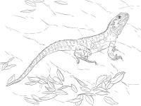 Раскраски детская детская раскраска рептилии,  ящерица