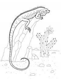 Раскраски детская детская раскраска древние рептилии,  ихтиозавр