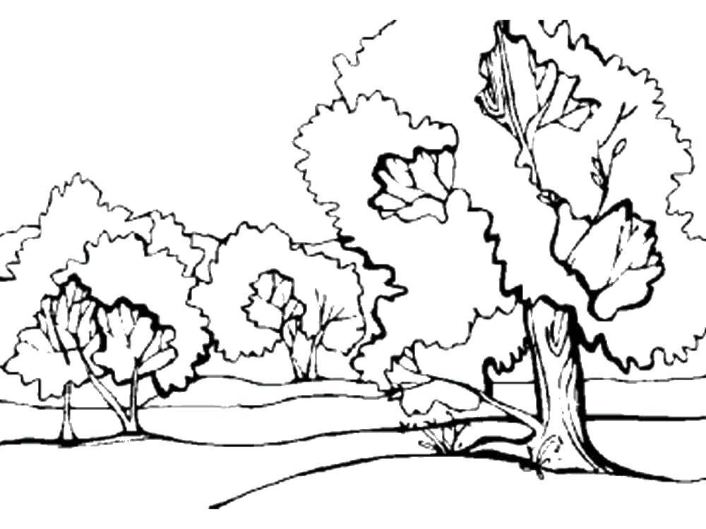 Лес Скачать или распечатать раскраску распечатать скачать Раскраски распечатать