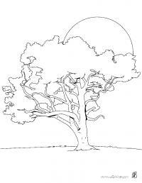 Раскраски солнце раскраска дерево,большое солнце,рассвет,пышное дерево